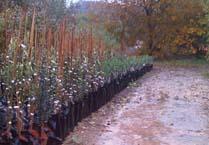 גשם במשתלה - כיצד להכין את הגינה לחורף