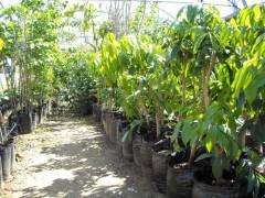 עצי ליצי במיכלי 25 ליטר
